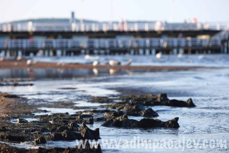 Cyanobacteria blooms at Sopot's beach, Poland