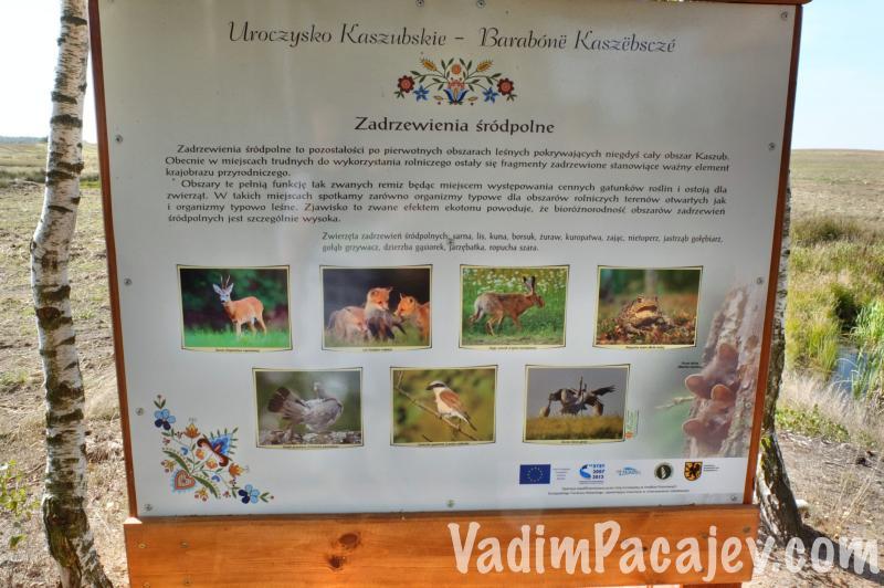 uroczysko-kaszubskie-FLUMI0709814ro2_50