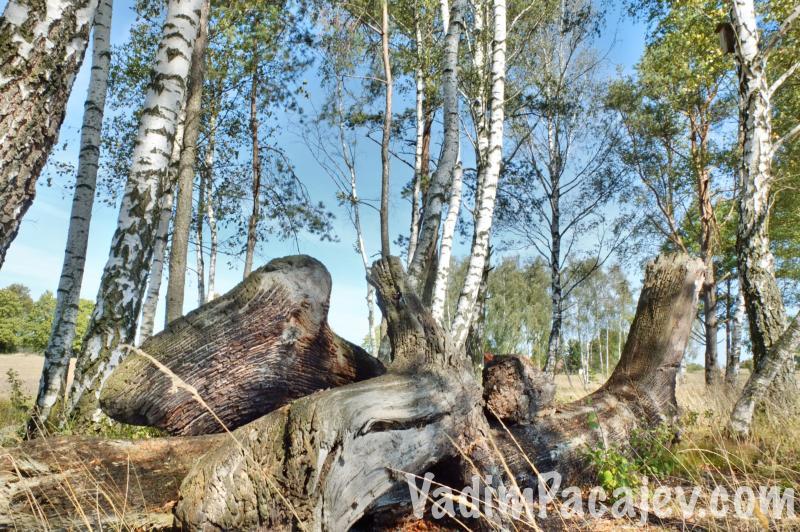 uroczysko-kaszubskie-FLUMI0709814ro2_54