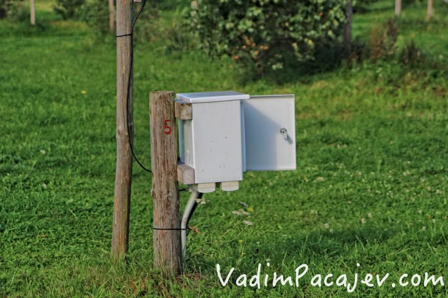 smoldzinski-las-img_9935-copy